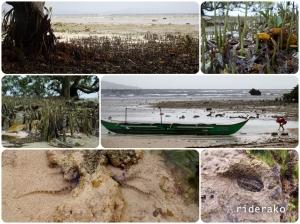 Mangroves, pneumatophores, brittle star, sowbug.. Science stuff man!!
