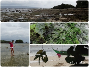 the rocky beach exposed during low tide,