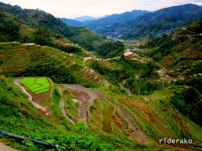 the Banaue Rice Terraces in Ifugao
