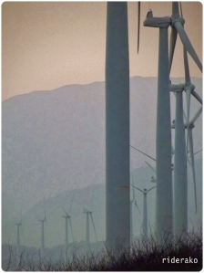 The wind turbines lining up on the Bangui shoreline.