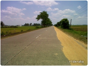 A seemingly endless stretch with farmers drying palay on the side of the road