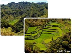 There would be mini-rice terraces every so often and this one really caught my attention.