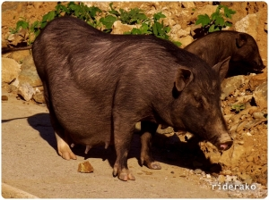 Hi there, Preggy Piggy!! How was the visit to the OB?