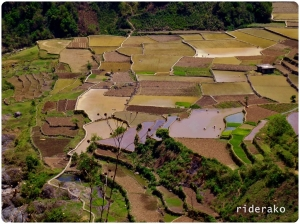 The low-lying rice terraces looked like a map of the United States.